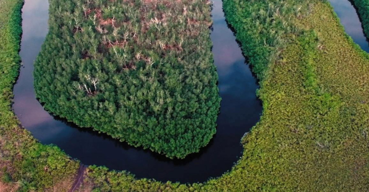 Aerial view of the mangrove in Pongara (Gabon). © IRD - Hubert Bataille